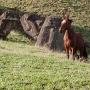 Trots paard wandelt tussen de Moais, Rano Raraku