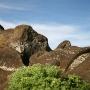Moai die nooit voltooid is en nog vast zit in de rotsen