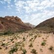 Landschap tijdens de Wadi Dana Trail