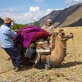 2 kamelen gingen mee als lastdieren. Hier zijn Baina en Batu de kameel aan het opzadelen. 1 kameel kan maar liefst 150kg dragen