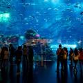 Indoor aquarium in de Dubai Mall