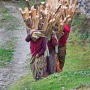 Vrouwen dragen brandhout