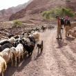 Wadi Dana Trail