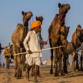 Handelaren arriveren voor de wereldberoemde Pushkar Fair
