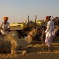 Kameel wordt beschilderd voor de Pushkar Fair